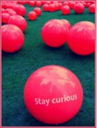 stay curious 12